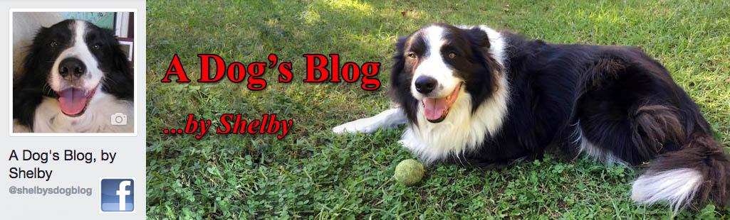 adogsblogFBbanner.jpg