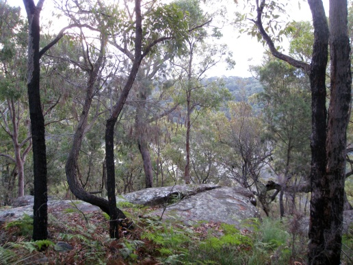 Another view of the fog over the river, taken from a different location, higher up the hill and through the trees.