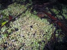 Lichen growing on the ground